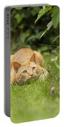 Cat Watching Prey Portable Battery Charger