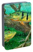 Catching Peacock Bass - Pavon Portable Battery Charger