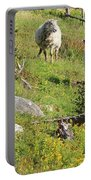 Cautious Sheep In The Pasture Portable Battery Charger