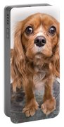 Cavalier King Charles Spaniel Puppy Portable Battery Charger by Edward Fielding
