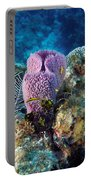 Cayman Reef Portable Battery Charger