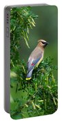 Cedar Waxwing 2 Portable Battery Charger