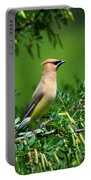 Cedar Waxwing 4 Portable Battery Charger