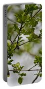Cedar Waxwing Pictures 15 Portable Battery Charger