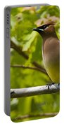 Cedar Waxwing Pictures 38 Portable Battery Charger