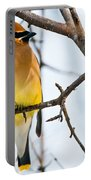 Cedar Waxwing Pictures 53 Portable Battery Charger