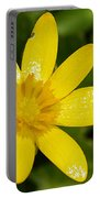 Celandine Portable Battery Charger