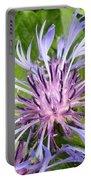 Centaurea Montana Blue Flower Portable Battery Charger