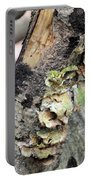 Violet-toothed Polypore Portable Battery Charger