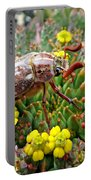 Chafer Beetle On Medusa Succulent Portable Battery Charger