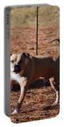 Charging Pitbull Portable Battery Charger