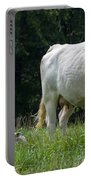 Charolais Cow And Calf In Field Portable Battery Charger