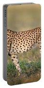Cheetah Acinonyx Jubatus Walking Portable Battery Charger