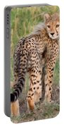 Cheetah Cub Looking Your Way Portable Battery Charger