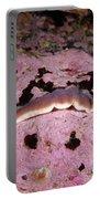 Chevron Amphiporus Portable Battery Charger