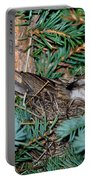 Chipping Sparrow On Nest Portable Battery Charger
