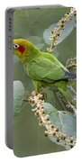 Chiriqui Conure 2 - Dp Portable Battery Charger