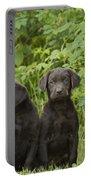 Chocolate Labrador Retriever Puppies Portable Battery Charger