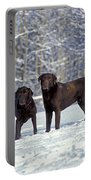 Chocolate Labrador Retrievers Portable Battery Charger