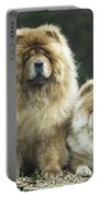 Chow Chow Dogs Portable Battery Charger
