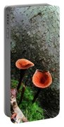 Cinnamon Polypore  Portable Battery Charger
