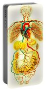 Circulatory System Portable Battery Charger