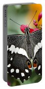 Citrus Swallowtail Butterfly  Portable Battery Charger