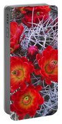 Claretcup Cactus In Bloom Wildflowers Portable Battery Charger