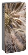 Clematis Seedpod Close Up Portable Battery Charger