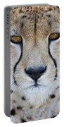 Close-up Of A Cheetah Acinonyx Jubatus Portable Battery Charger