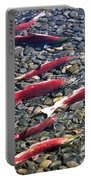 Close-up Of Fish In Water, Sockeye Portable Battery Charger