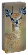 Close-up Of Klipspringer Oreotragus Portable Battery Charger