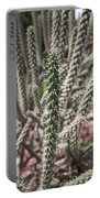 Close Up Of Long Cactus With Long Thorns  Portable Battery Charger