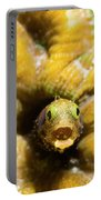 Close-up Spinyhead Blenny Portable Battery Charger