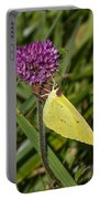 Clouded Sulphur On Clover Portable Battery Charger