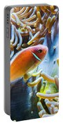 Clown Fish - Anemonefish Swimming Along A Large Anemone Amphiprion Portable Battery Charger