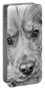 Cocker Spaniel Dog Black And White Portable Battery Charger