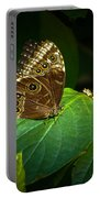 Common Blue Morpho Moth Portable Battery Charger