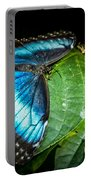 Common Blue Morpho Portable Battery Charger