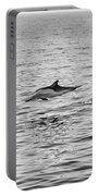 Common Dolphins Leaping. Portable Battery Charger