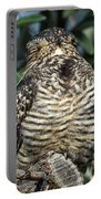 Common Nighthawk Napping Portable Battery Charger