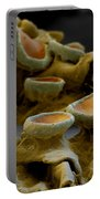 Common Orange Lichen Portable Battery Charger