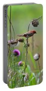 Common Redpoll In A Field Of Thistle Portable Battery Charger