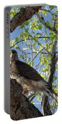 Cooper's Hawk In A Cottonwood Portable Battery Charger