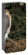 Coopers Hawk In Predator Mode Portable Battery Charger