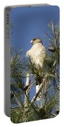 Coopers Hawk In Tree Portable Battery Charger