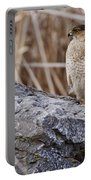Coopers Hawk Pictures 91 Portable Battery Charger