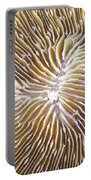 Coral Closeup Portable Battery Charger