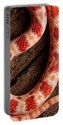 Corn Snake P. Guttatus On Tree Bark Portable Battery Charger