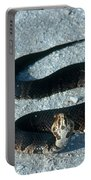 Cottonmouth Threat Display Portable Battery Charger